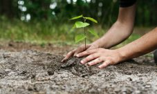 10 Beneficios de plantar árboles