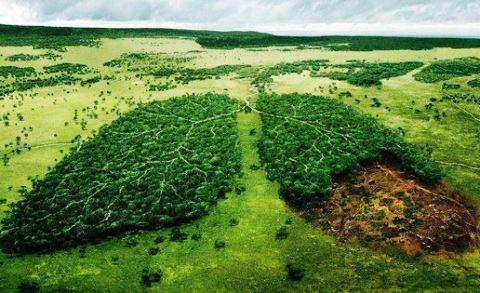 Consecuencias de la tala de árboles