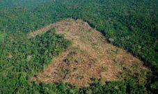 Degradación de los bosques