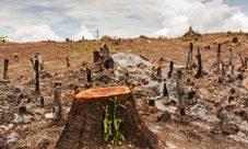 Efectos de la deforestación