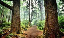 Cómo preservar los bosques