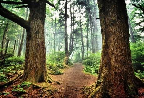 Cómo cuidar los bosques