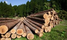 Qué es la tala de árboles
