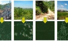 Tipos de deforestación