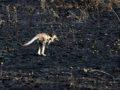 Animales afectados por la deforestación