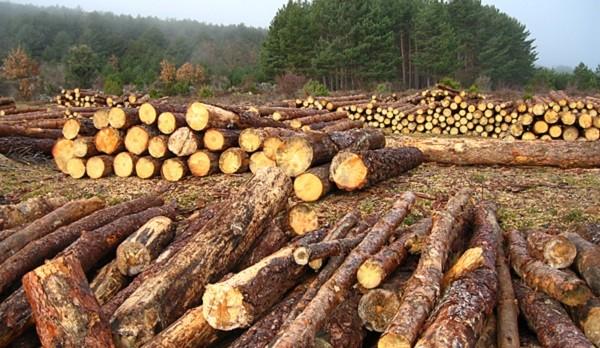 Causas y consecuencias de la tala de árboles