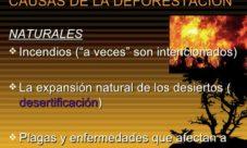 Causas naturales de la deforestación
