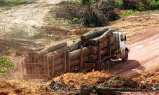 Causas de la tala de árboles