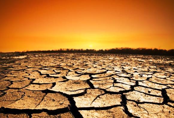 ¿Cómo influye la deforestación en el calentamiento global?