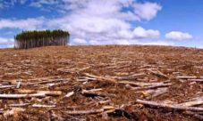 Conclusión acerca de la deforestación