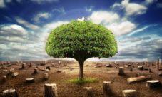 Consecuencias ambientales de la tala de árboles