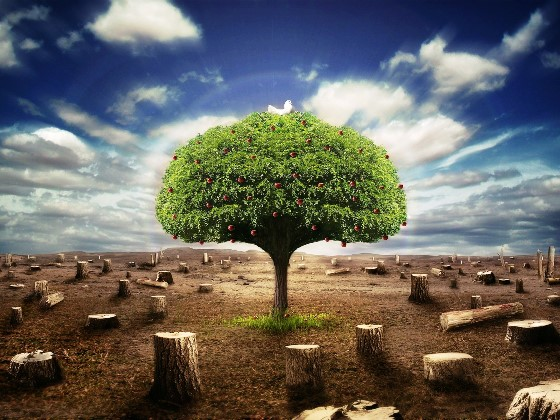 Consecuencias ambientales de la tala de rboles for Medio en el que habitan los arboles