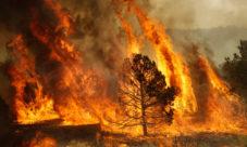 Consecuencias de la quema de árboles