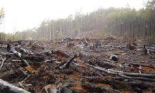 Cómo influye la deforestacion en el cambio climatico