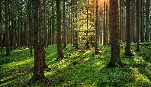 ¿Cómo evitar la deforestación de los bosques?