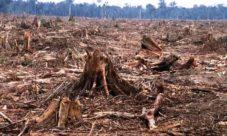 Imágenes de la deforestación