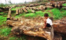 Imágenes de la tala de árboles