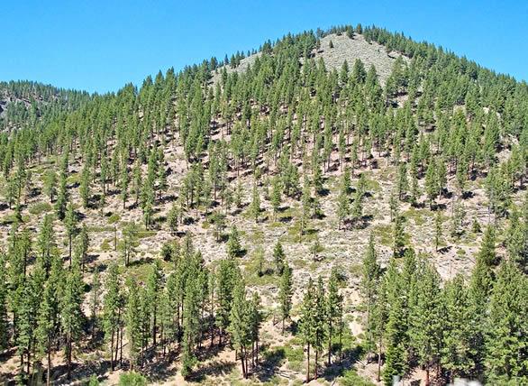 Importancia de la reforestación