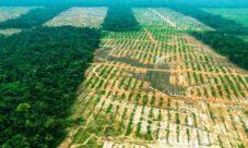 ¿Qué es la deforestación agrícola?