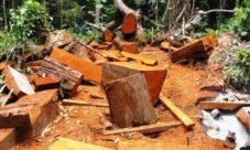 ¿Qué puede ocasionar la tala de árboles para obtener madera?