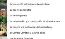 ¿Qué provoca la deforestación?