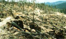 Recursos naturales afectados por la deforestación