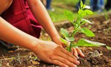 ¿Qué es la reforestación ambiental?