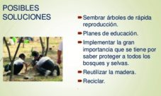 Posibles soluciones para la deforestación
