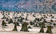 ¿Qué es la tala indiscriminada de árboles?