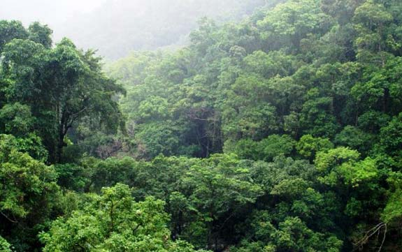Tipos de bosques y sus características